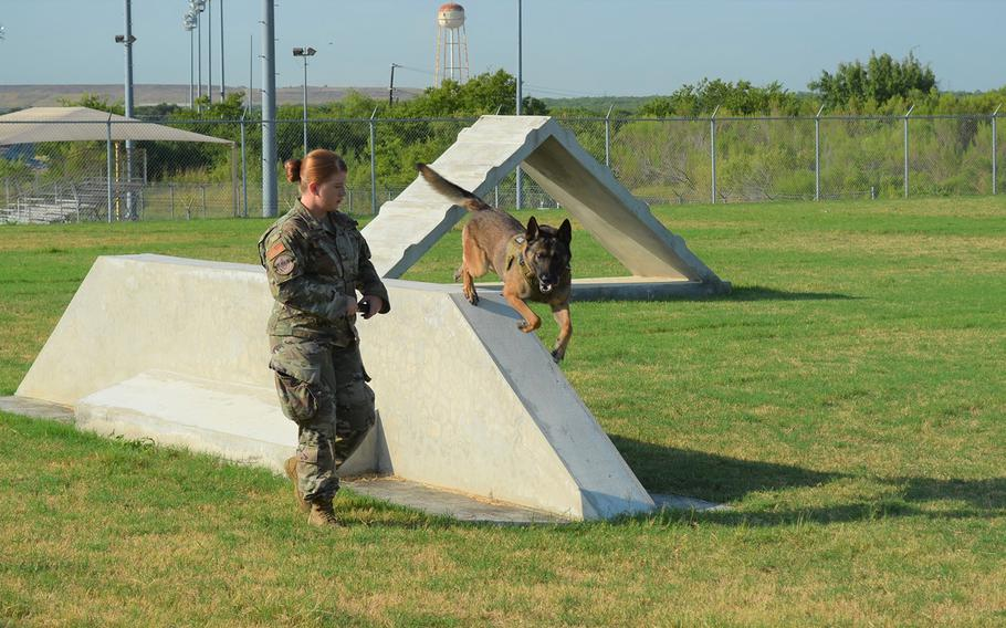 Tarzan, a 6-year-old military working dog, runs an obstacle course Thursday with handler Staff Sgt. Sarah Banks at Joint Base San Antonio in Texas.