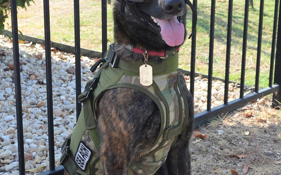 Callie, a 2-year-old Dutch shepherd, is the Defense Department's only search and rescue dog and trained to skydive and ski. She was certified three months ago and is ready for her first real-world assignment, said Master Sgt. Rude Parsons. The team are assigned to the Kentucky Air National Guard, but attended a ceremony to unveil a military working dog stamp Thursday at Joint Base San Antonio in Texas.