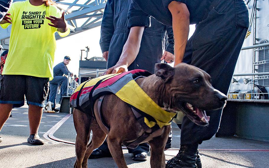 A sailor greets Zeus the dog with his owner Tasha Fuiaba, left, on the boat deck of the amphibious dock landing ship USS Ashland on Oct. 25. 2017.