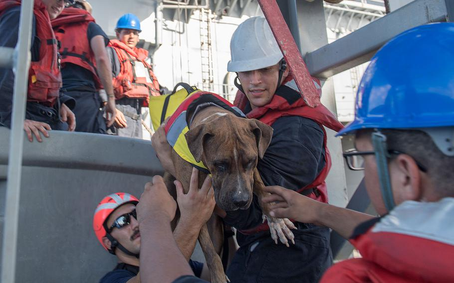 Sailors help Zeus, one of two dogs who were accompanying two mariners who were aided by the amphibious dock landing ship USS Ashland on Oct. 25, 2017.