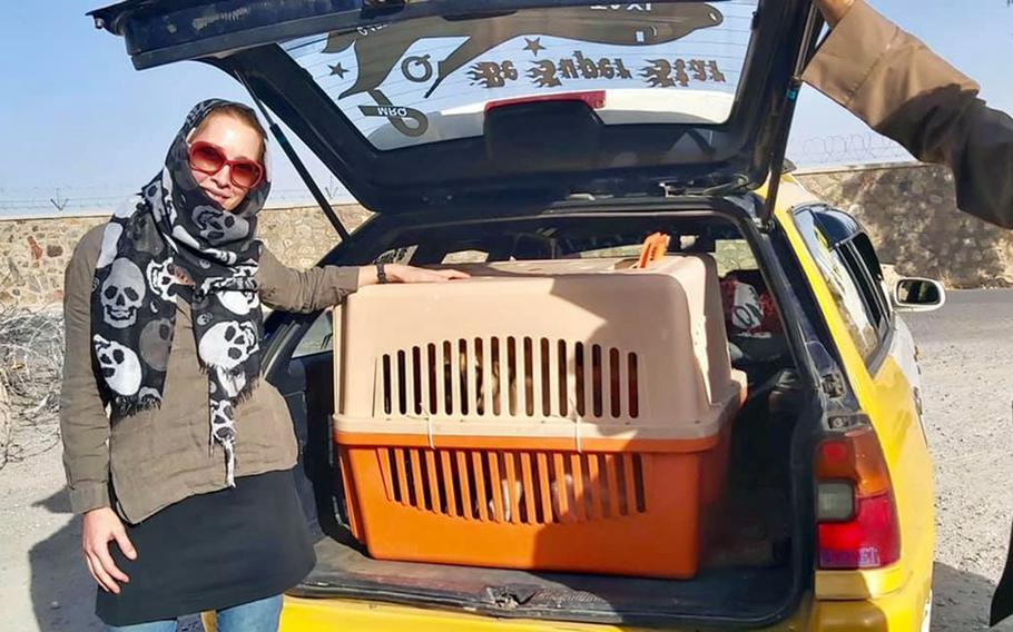 Charlotte Maxwell-Jones, founder of Kabul Small Animal Rescue, transports rescued dogs in Kabul, Afghanistan, in 2020.