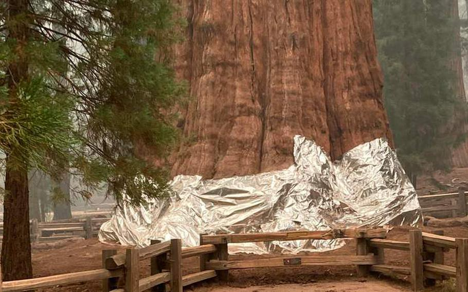 The General Sherman Tree in Sequoia National Park wrapped in aluminum.