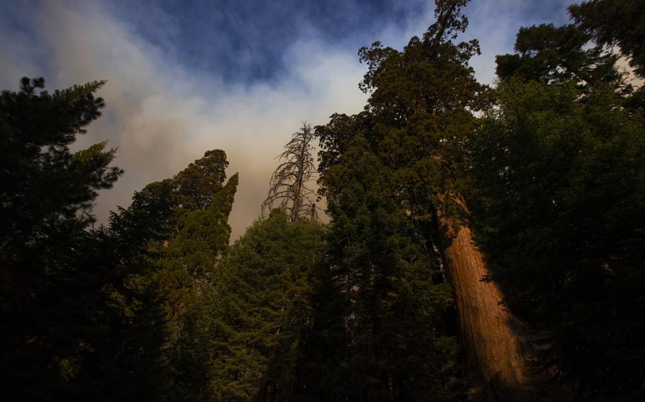 Smoke fills the sky in the Sequoia National Forest above a giant sequoia on the Windy fire near the Tule River Reservation on Sept. 16, 2021 in Sequoia National Forest, Calif.