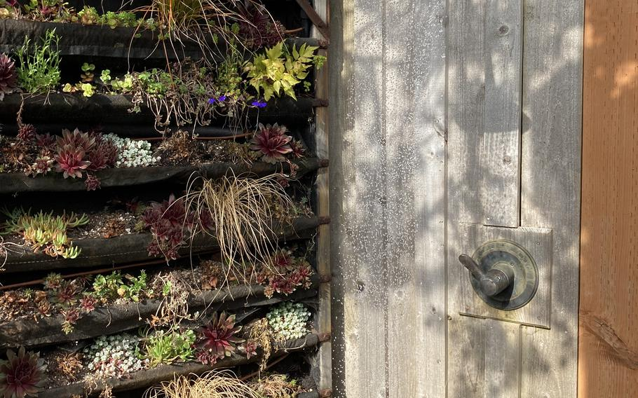 The outdoor shower and succulent wall at Hart's Camp Airstream.