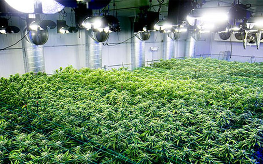Harmony Dispensary in Secaucus, N.J., grows and sells medical cannabis.