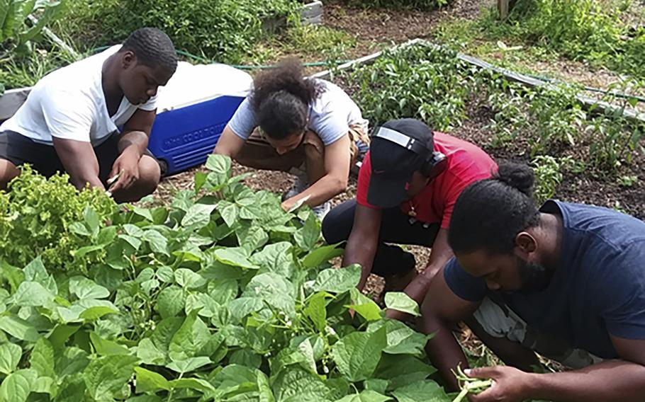 Members of the community-based Alternatives-to-Incarceration (ATI) initiative tend to crops at the Brook Park Youth Farm.