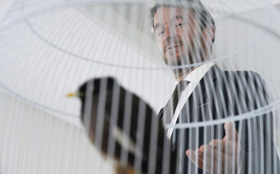 French Ambassador to the United Arab Emirates, Xavier Chatel gestures towards Juji, a rescued yellow-beaked mynah carried into the United Arab Emirates by a fleeing Afghan refugee, in Abu Dhabi, United Arab Emirates, Sunday, Oct. 10, 2021.