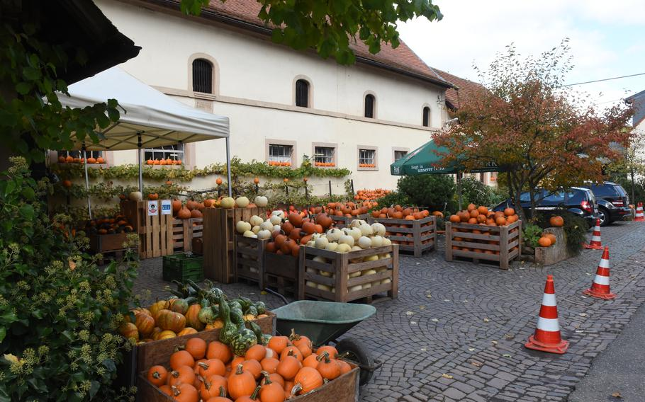 Hitscherhof farm in Massweiler, Germany, is a great place to shop for pumpkins and squash. The farm is about a 40-minute drive from Kaiserslautern.