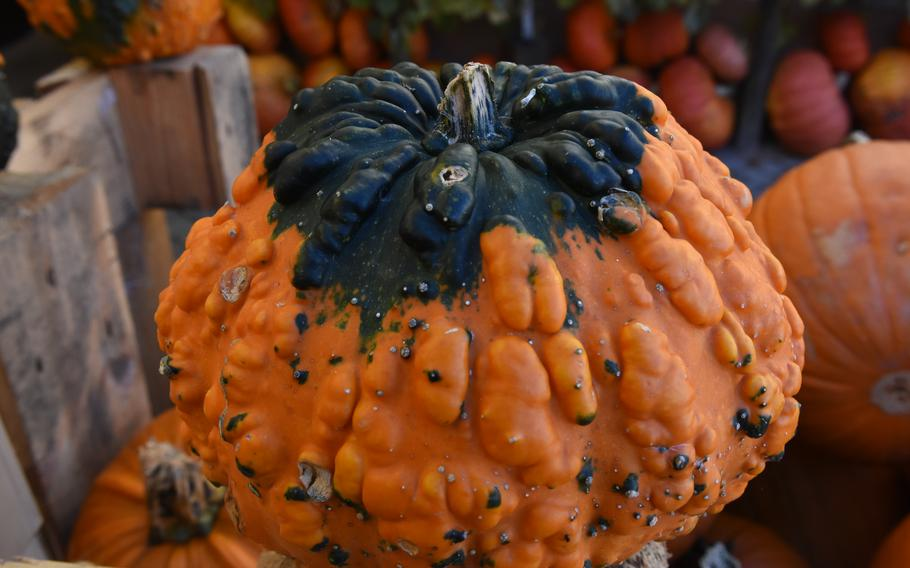 One of the stranger-looking varieties found at Hitscherhof farm in Massweiler, Germany. The farm's bounty includes a vast assortment of pumpkins, squash and gourds.