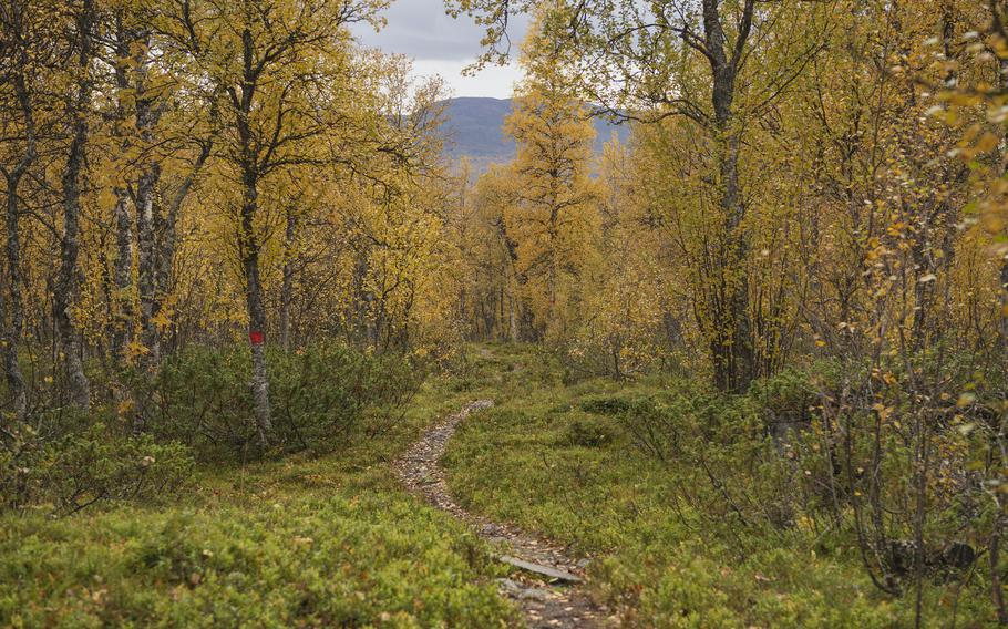 Hikes such as Sweden's Kungsleden Trail, shown here wending through a birch forest near Adolfsstrom, allow for as much social distancing as one could hope for.