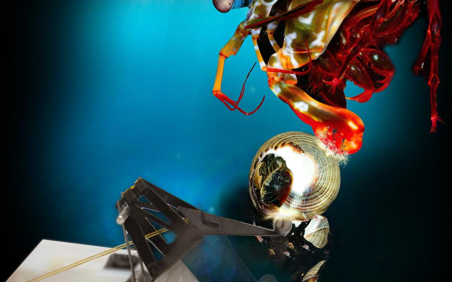 Researchers with Army funding build a robot that mimics the strong punch of a mantis shrimp.