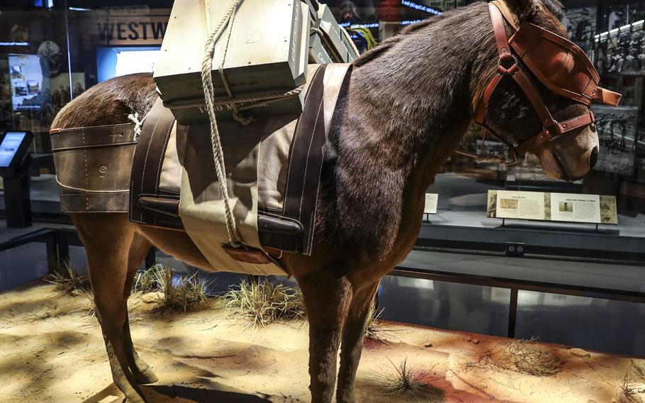 An exhibit honors Army pack mules at the National Museum of the United States Army on its reopening day, June 14, 2021.