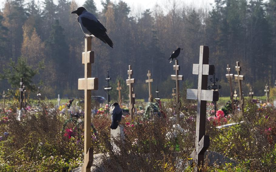 Crows sit on grave crosses in the section of a cemetery reserved for coronavirus victims in Kolpino, outside St. Petersburg, Russia, Tuesday, Oct. 12, 2021. Russia hit another record of daily coronavirus deaths Tuesday as the country struggled with a rapid surge of infections and lagging vaccination rates, but authorities have been adamant that there would be no new national lockdown.