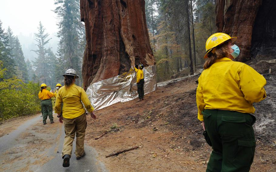 National Park Service staff inspect the insulated structure protection wrapped base of one of the Four Guardsmen giant sequoias during a tour of the KNP Complex fire burn area around Giant Forest on Sept. 30, 2021 in Sequoia National Park, Calif.