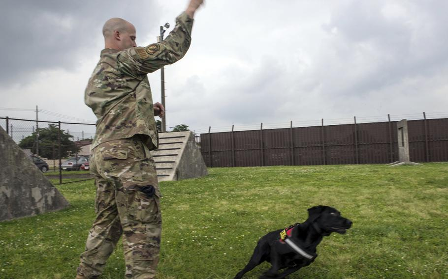 Air Force Staff Sgt.  David Ferro works with Splash, one of the newest military working dogs from 374 Security Forces Squadron, at Yokota Air Base, Japan, June 25, 2021.