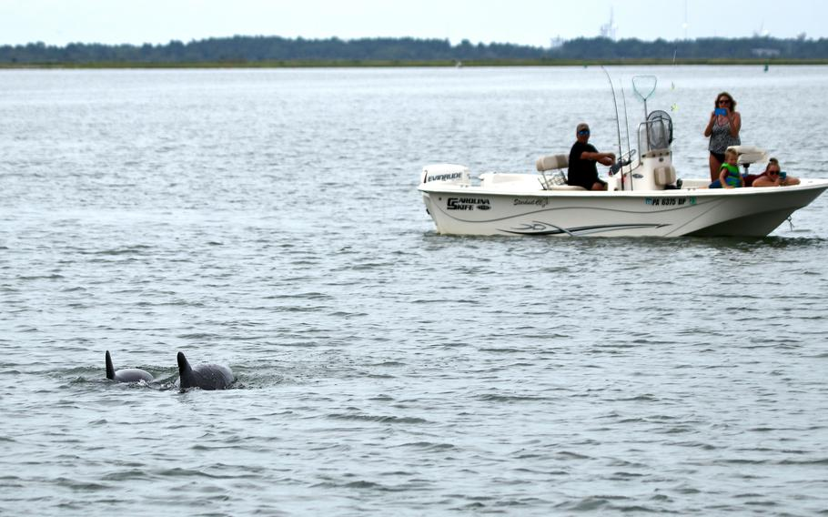 Tourists watch bottlenose dolphins off the coast of Chincoteague Island.