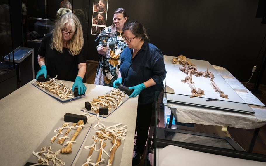 Employees from the National Museum of Denmark unpack the skeleton of a man found in a mass grave in Oxford, England, in Copenhagen, on Wednesday, June 9, 2021. The skeletons of two related Viking-era men, one who died in central Denmark and the other who was killed in England during a massacre ordered by a king, are set to be reunited for an exhibition opening in Copenhagen this month.