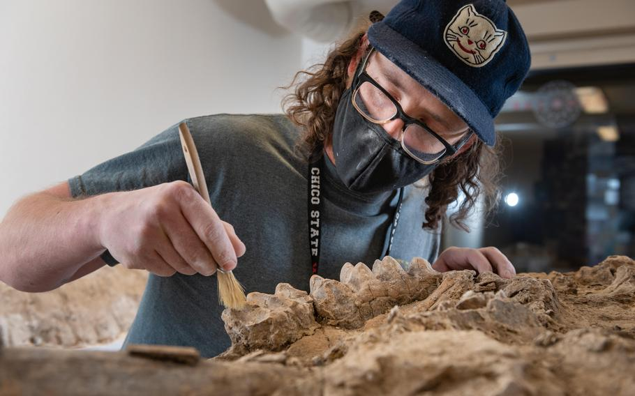 University instructional support technician Sean Nies prepares the fossilized skull of a mastodon in a lab at California State University at Chico.