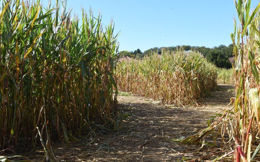 A corn maze offers a fun diversion at Hitscherhof farm in Massweiler, Germany. Entry to the labyrinth is free with a minimum purchase of 6 euros per person in the farm shop. Otherwise, the cost is 3 euros per person for groups smaller than 15.