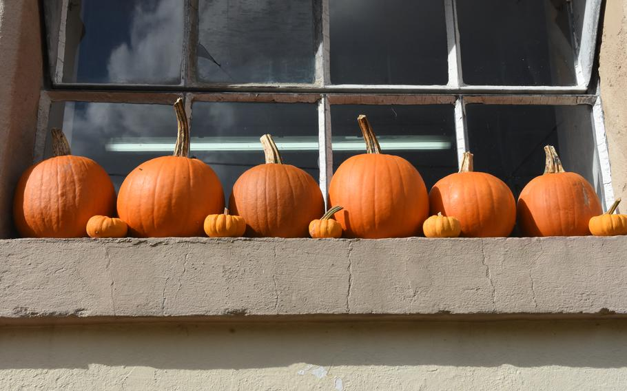 Tiny pumpkins line a window ledge at Hitscherhof farm in Massweiler, Germany. The farm sells numerous varieties of pumpkins, squash and gourds for eating and decoration. Its farm shop is open through the end of October.