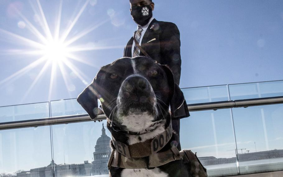Veteran David Crenshaw and his service dog Doc at a Capitol Hill news conference to promote House bill, H.R. 1022, the Puppies Assisting Wounded Servicemembers (PAWS) Act, March 3, 2021.