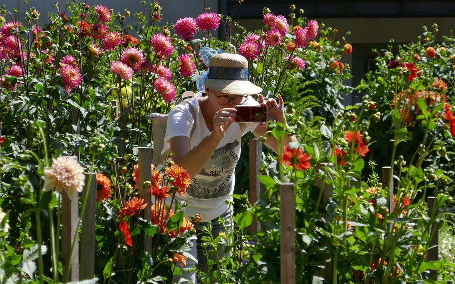 A visitor photographs the flowers in the dahlia garden in Fulda, Germany. The small garden is across the street from the basilica.