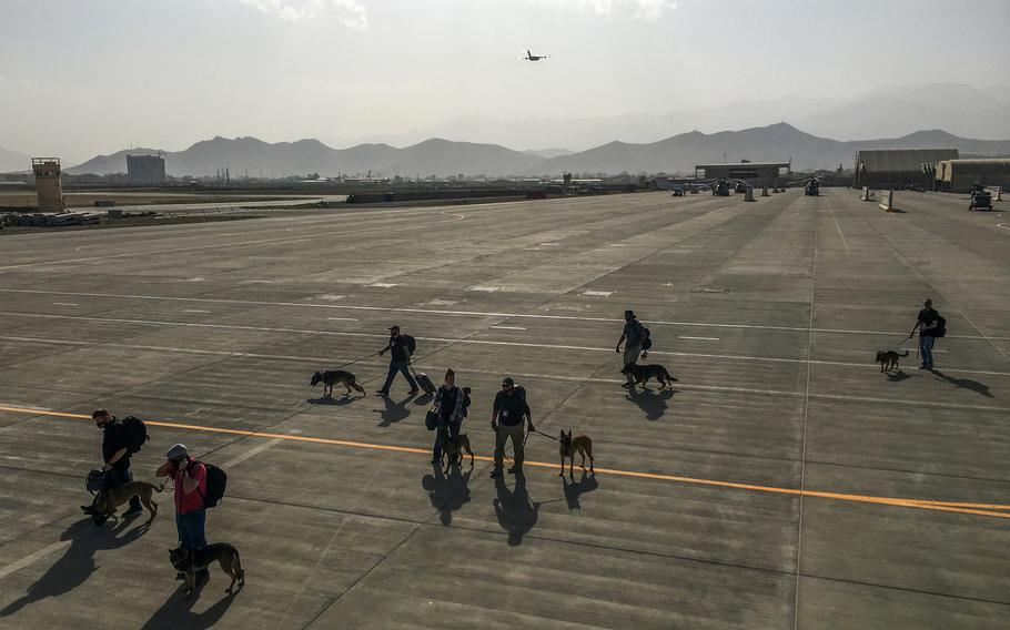 U.S. military working dogs are escorted onto an evacuation flight at Kabul's military airport on Aug. 15, 2021.