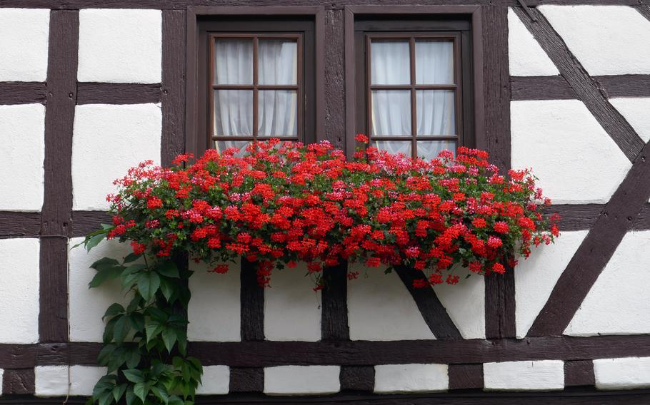 Geraniums hang from flower boxes on a half-timbered house in Dreieichenhain, Germany. The town, about 30 miles east of Wiesbaden, is known for its colorful houses and its medieval castle.