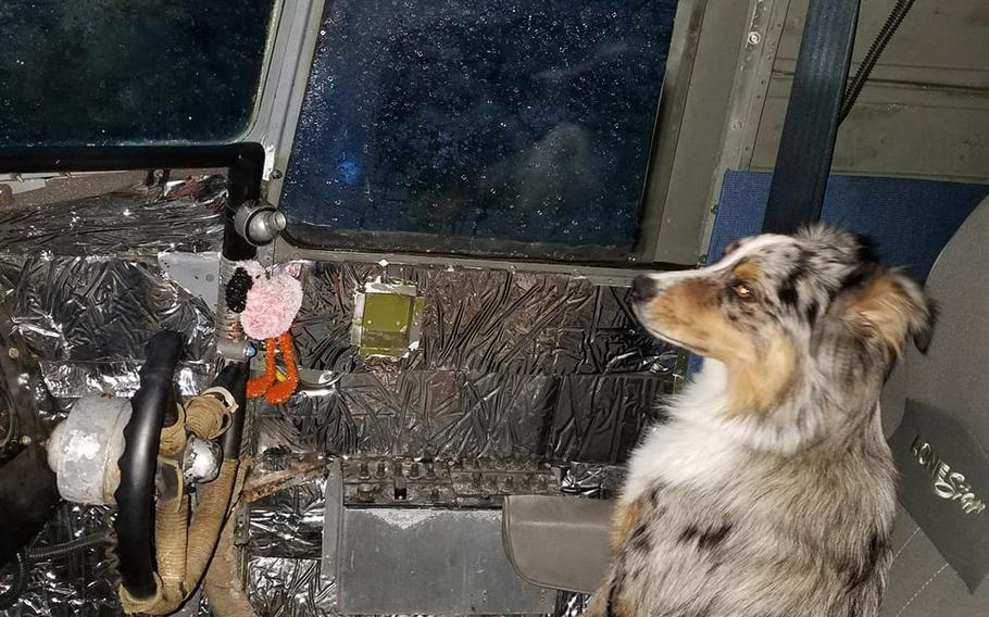Gino Lucci's Australian shepherd, Scooter, sits in the passenger seat of the World War II-era transporter plane that Lucci bought in 2019 and converted into a motor home.