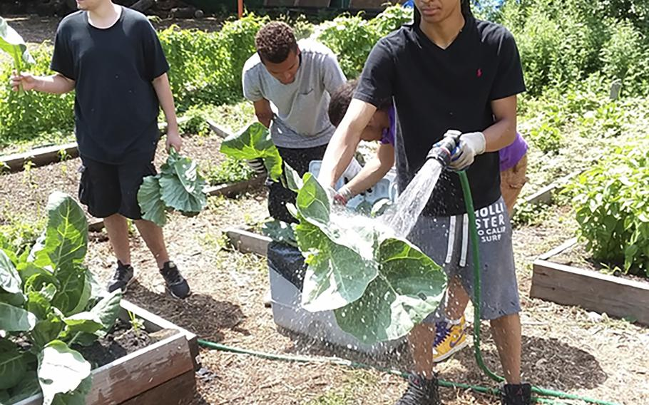Members of the community-based Alternatives-to-Incarceration (ATI) initiative at the Brook Park Youth Farm tend to the crops.