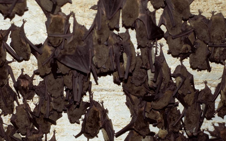 Bats can carry diseases and potentially infect soldiers operating in caves, the Army Corps of Engineers said. The U.S. Army Engineer Research and Development Center is working on how to develop sensors that would eventually be fitted to unmanned vehicles to detect naturally occurring threats in caves and underground.
