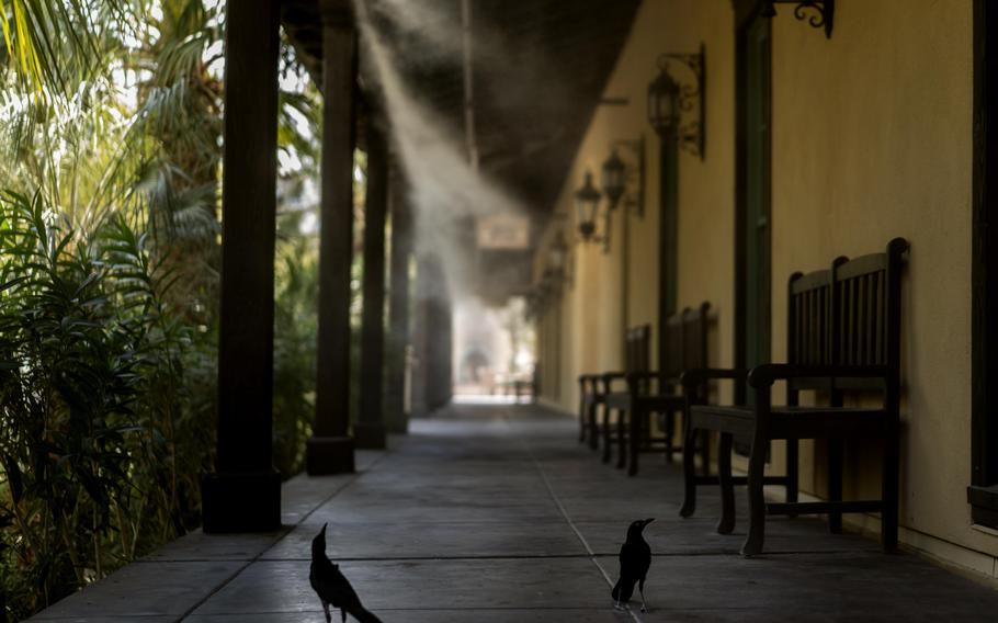 Birds searching for water and shade stand under continuous misting machines at The Ranch at Death Valley.