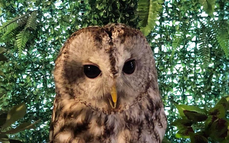 To add to its otherworldly environment, Nukumori No Mori is home to an owlery where guests can pet and interact with the birds.