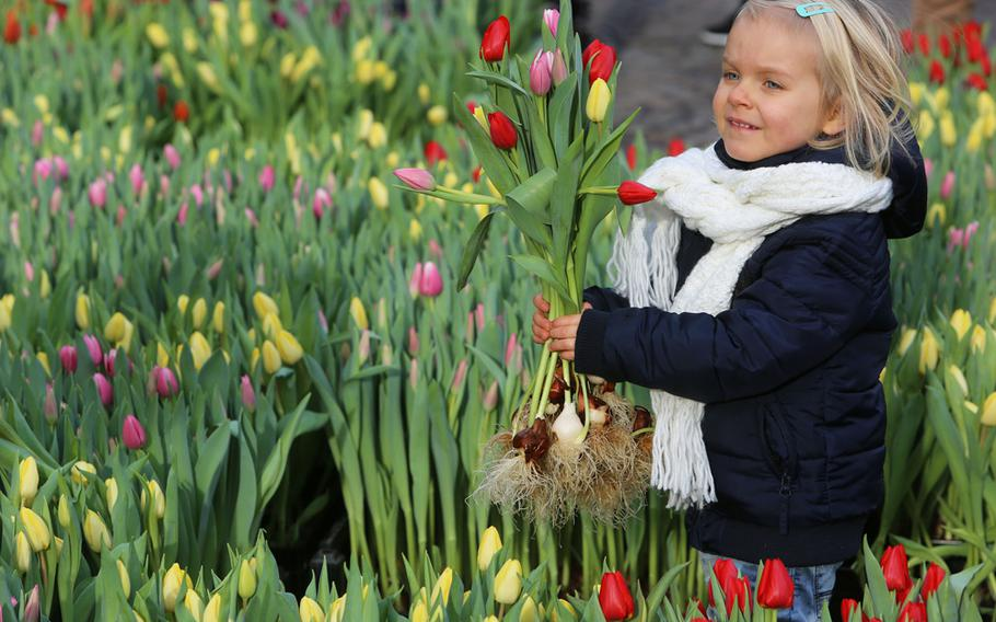 Visitors may take up to 20 tulips, bulbs and all, free of charge at Amsterdam's Dam Square on Jan. 19 in celebration of National Tulip Day. The picking garden is open from 1-4:30 p.m.