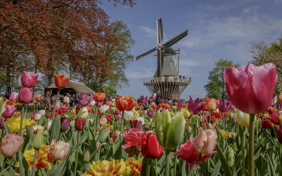 Keukenhof, the world's largest spring garden, opens for the season March 21 in Lisse, Netherlands.