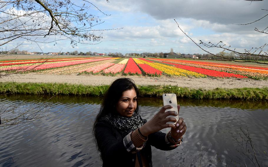 Tulips are all around at Keukenhof Gardens, now open in Lisse, Netherlands.