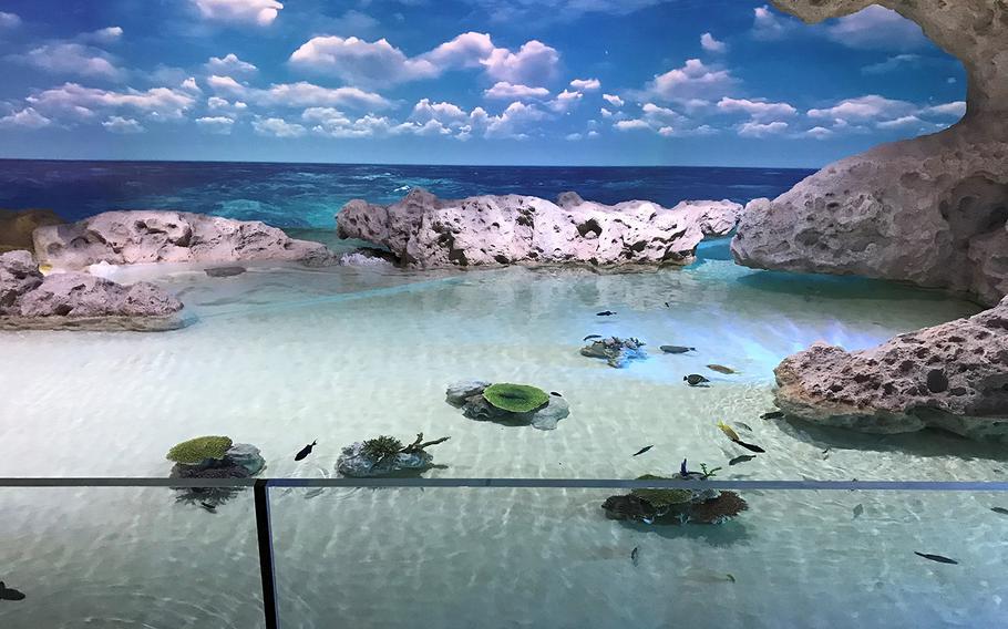 An Okinawa tidal pool is recreated at the brand new DMM Kariyushi Aquarium, located in the new Iias Okinawa Toyosaki mall in southern Okinawa, on Sept. 26, 2020.