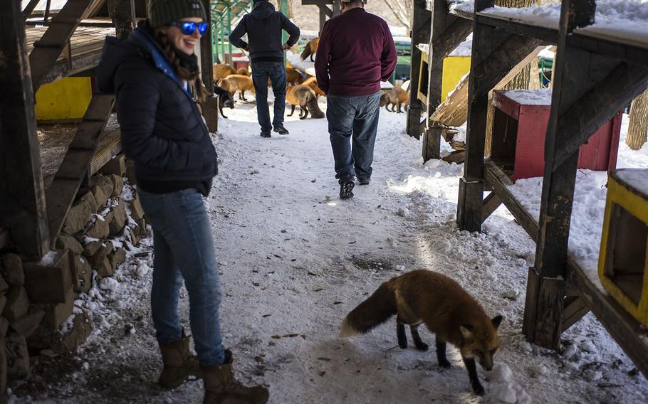 Rebekah Busch, an airman from Yokota Air Base, Japan, laughs as foxes skamper by at  Zao Fox Village in Shioisho, Japan, on Dec. 18, 2020.