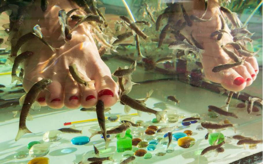 The Garra rufa species of fish is included in an pedicure service in many European locations.