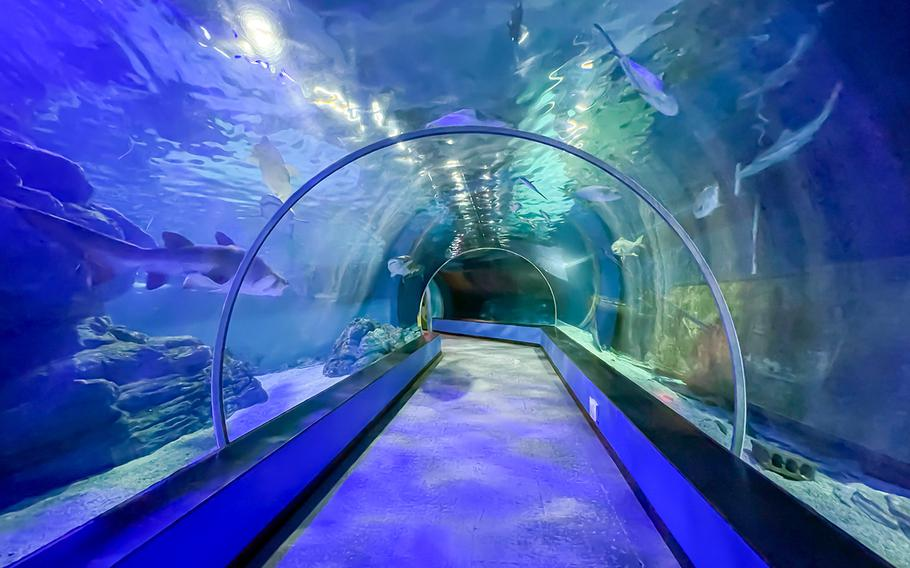 Sea Life Busan Aquarium is home to more than 250 species, ranging from the smallest clownfish to enormous sharks that trained divers feed by hand for all to see.