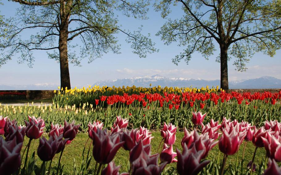 Morges, Switzerland, hosts the Tulip Festival on the shore of Lake Geneva until early May. The free festival presents more than 120,000 tulips of 300 varieties in Parc de l'Indépendance in Morges.