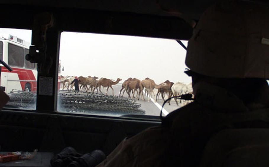 Although any stop by a convoy meant a force protection risk, Army Spc. Jennifer Parsons had no choice but to stop after a Bedouin led his camels across the highway and into the convoy.
