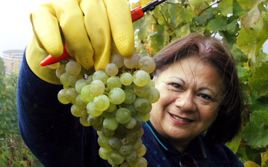Lu Yanik from Atlanta, Ga., shows the perfect Riesling grapes she just picked at the Händelberg vineyard of vintner Helmut Rappenecker.