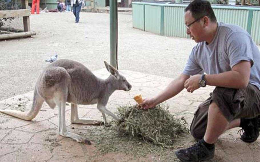 I take a moment to feed some domesticated kangaroos at the Featherdale Wildlife Park on my recent trip to Australia.