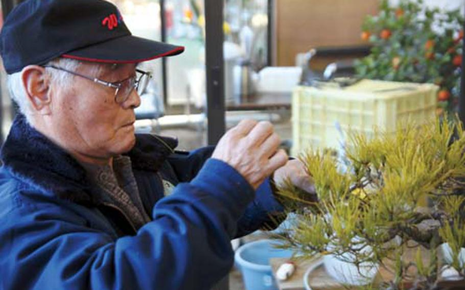 A local Japanese man practices the art of bonsai at the bonsai village in Saitama.
