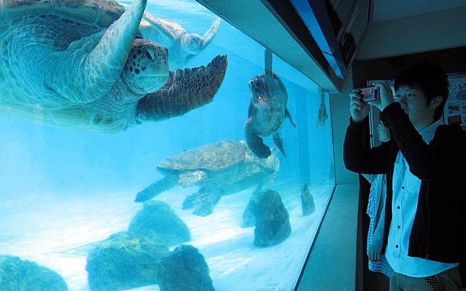 The Sea Turtle Pool at Okinawa?s Churaumi Aquarium has an aboveground viewing platform as well as an underground viewing room allowing visitors to really appreciate their underwater antics.