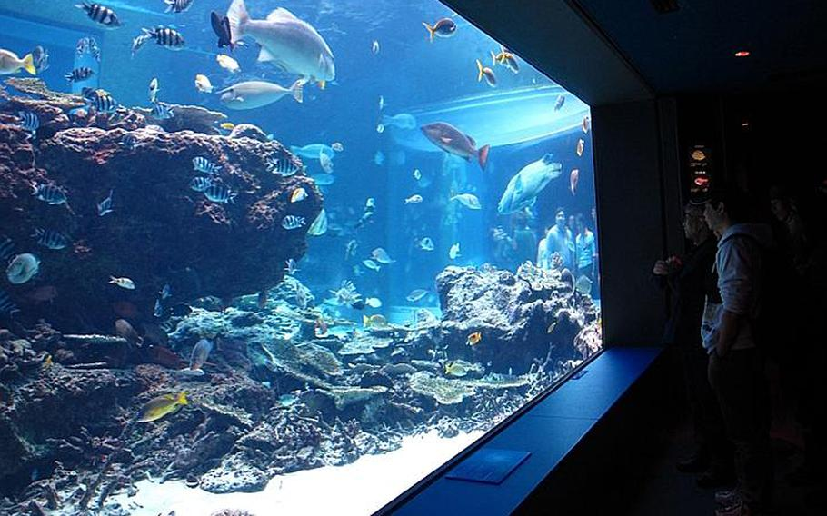 A coral reef exhibit houses fish species, some of which are common throughout the coral reefs around Okinawa.