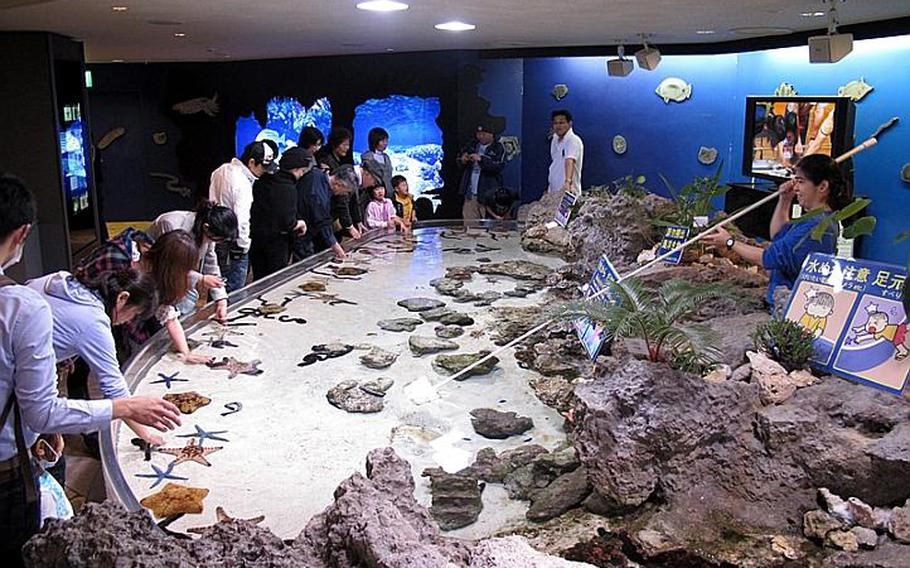 Visitors get a chance to touch sea creatures including starfish and sea cucumbers while visiting the Okinawa Churaumi Aquarium.