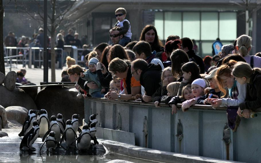 Visitors watch black-footed penguins at the zoological and botanical garden. Although they were all born in Europe, their reproductive rhythm follows the seasons of their native Southern Hemisphere.
