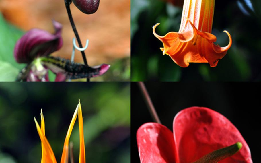 The botanical garden features more than 5,000 species of plants, many of which bear flowers.